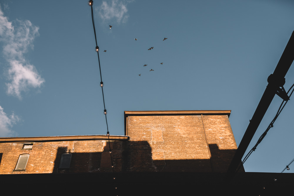 birds flying over an outdoor via vecchia winery jewish wedding photography